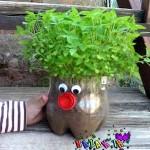 کاشت سبزه عروسکی
